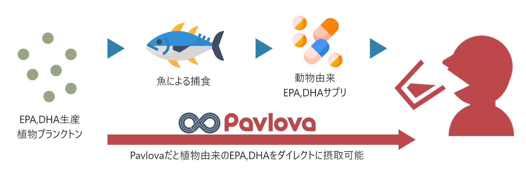Pavlovaだと植物由来のEPA,DHAをダイレクトに摂取可能