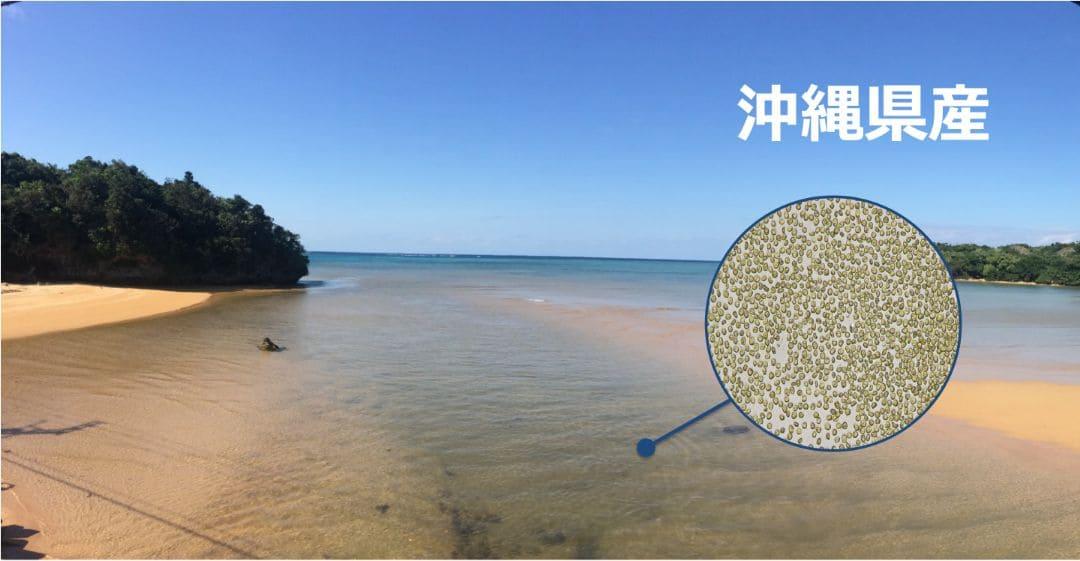 沖縄の海で採取